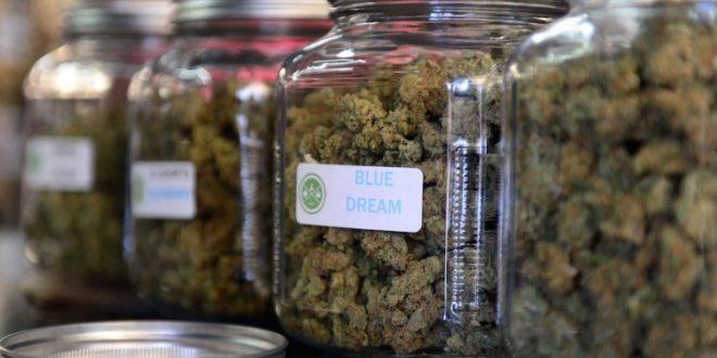 Квебекцы за один день скупили почти все запасы марихуаны