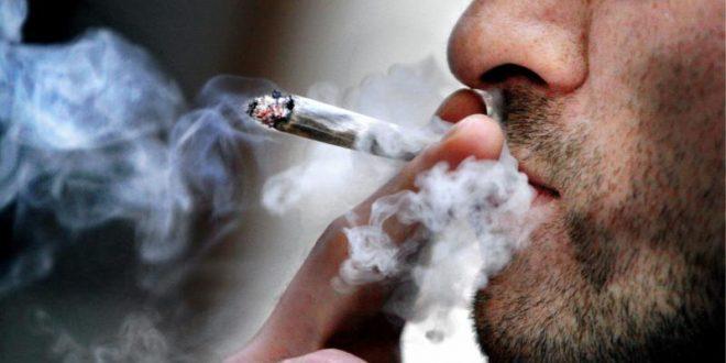 В Монреале с бешеным успехом открылись бутики по продаже марихуаны