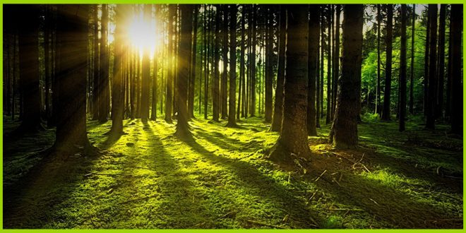 Экономист призывает рубить больше деревьев