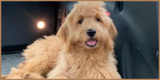 Помогите в поисках: 20 тысяч долларов за потерянного пса