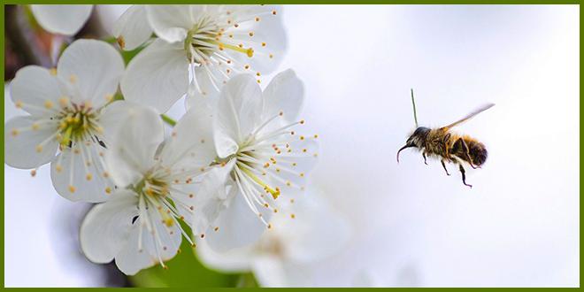Лаваль первым в Квебеке запрещает использование популярной садовой химии