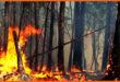 Лесные пожары вызвали очередной скачок цен на древесину
