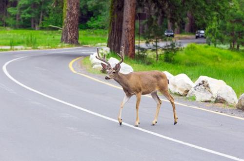 """Скачи олень, по моему хотенью? Но будьте крайне осторожны в """"оленеопасных"""" районах"""